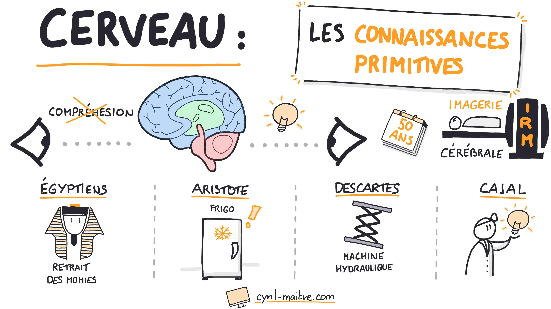 Les connaissances primitives sur le cerveau - les neurosciences en dessins