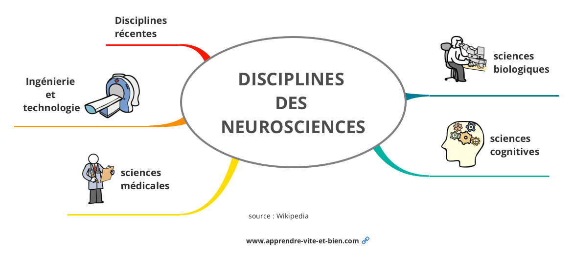 Mind map informatique sur les neurosciences