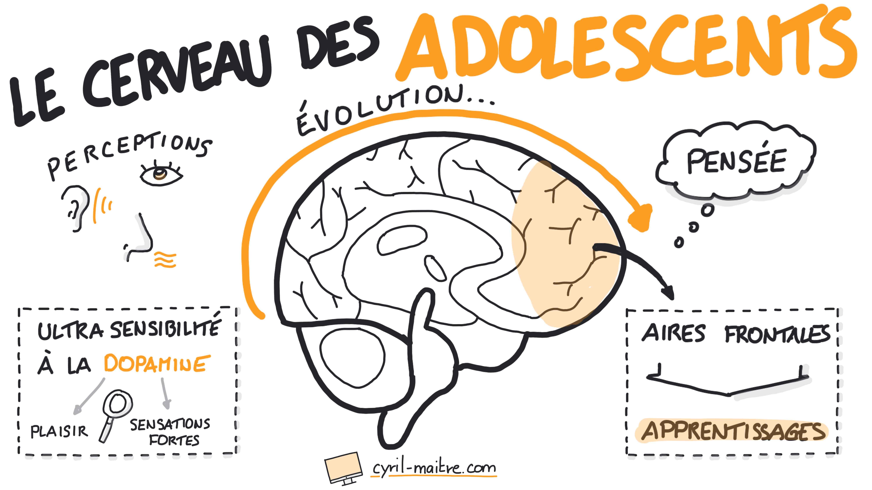 Le cerveau des adolescents - les neurosciences en dessins
