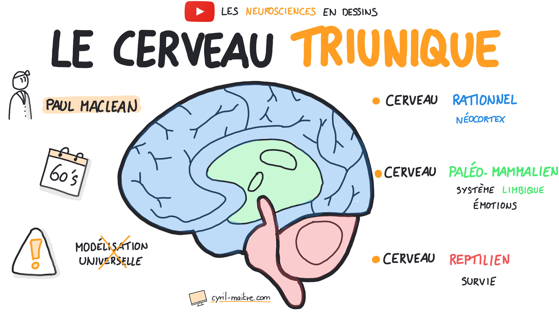 Le cerveau triunique - les neurosciences en dessins