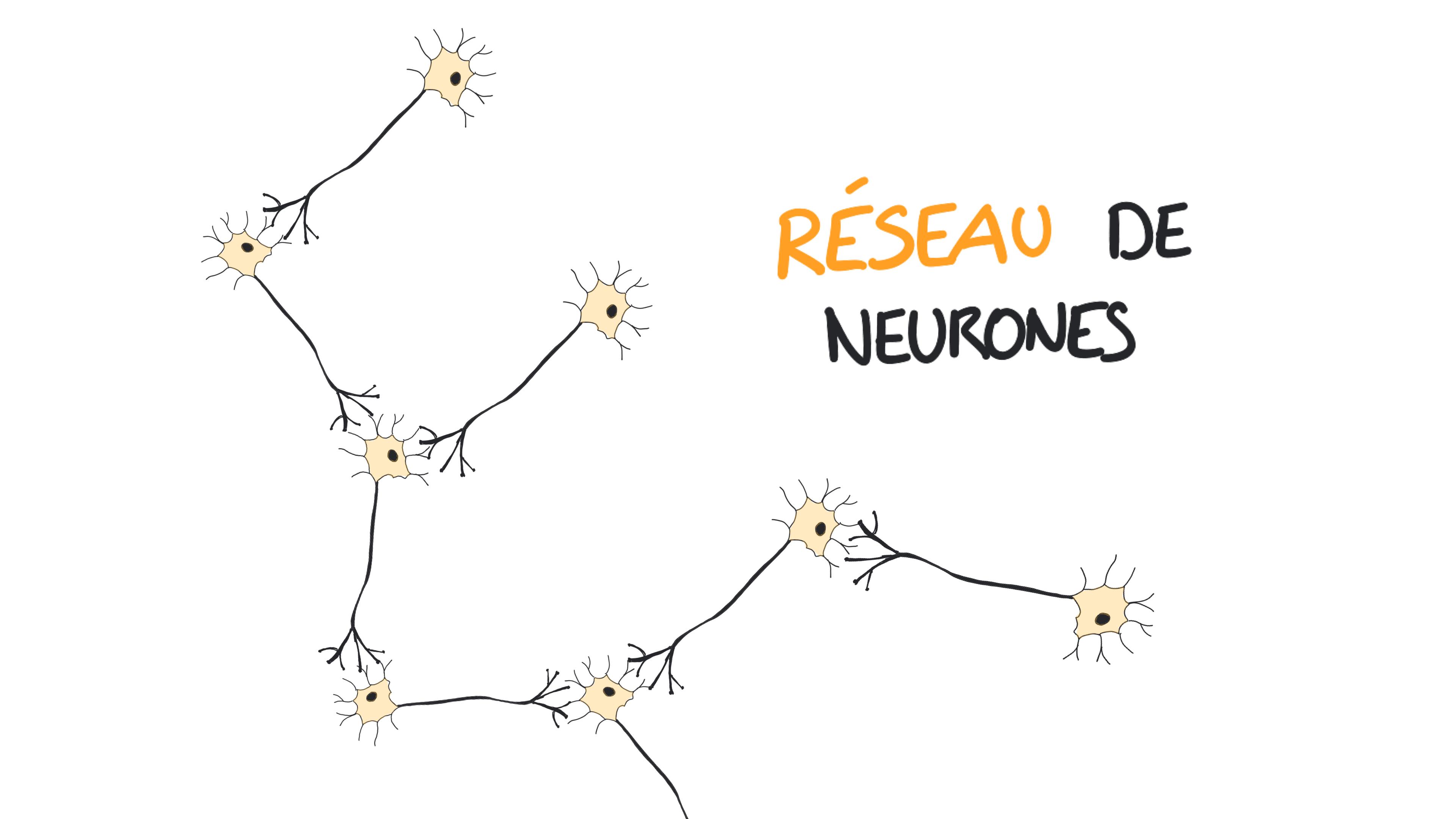 Un réseau de neurones