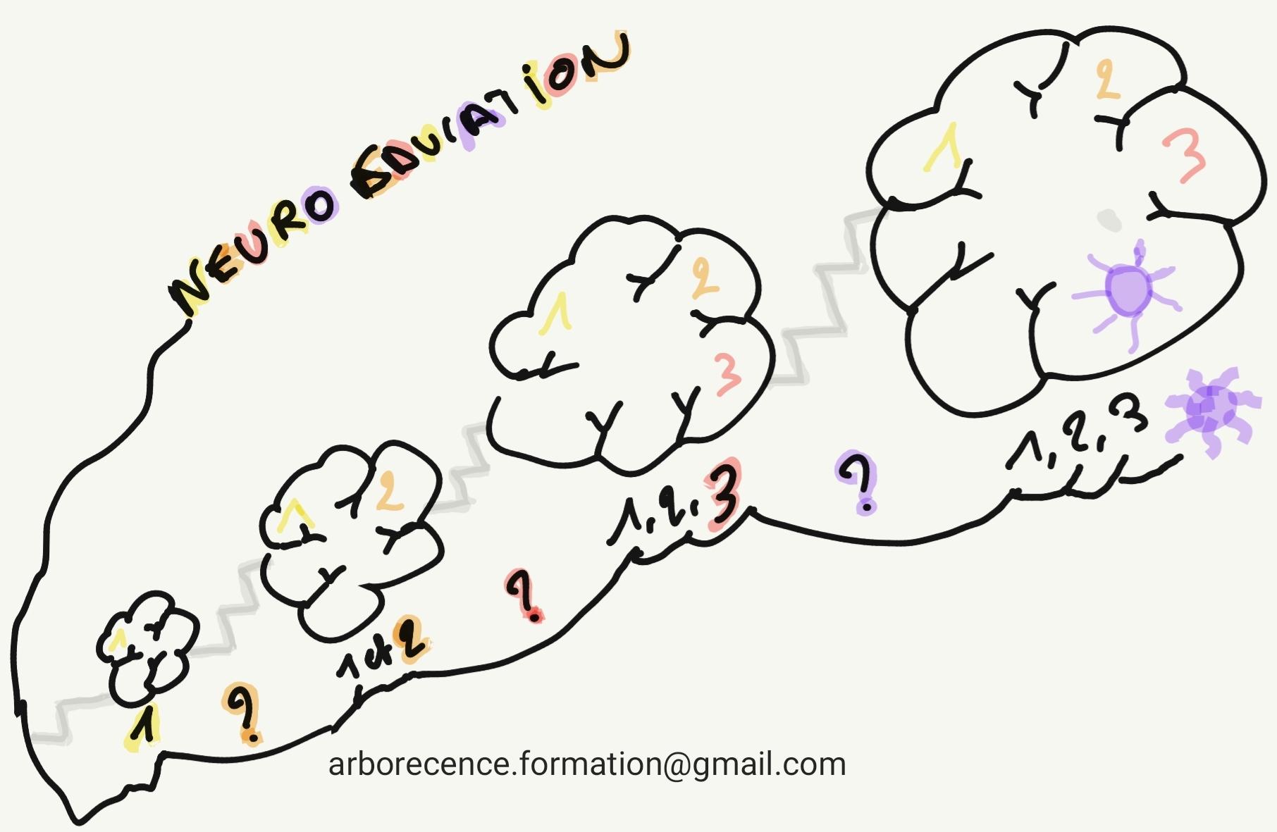 La neuro-éducation