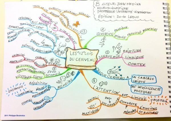 Mind map du livre les 12 lois du cerveau de John Medina.