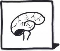 Influence du blanc sur votre cerveau