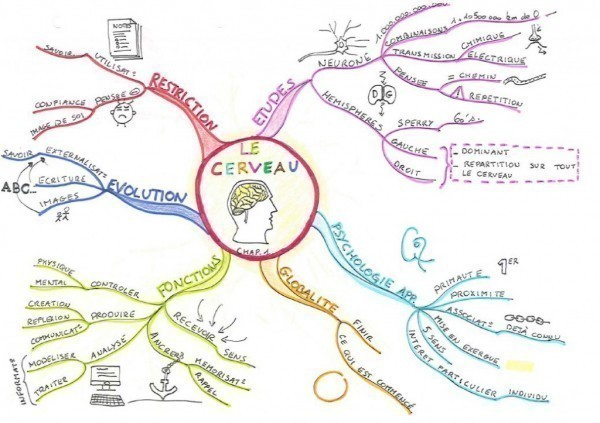 Carte du chapitre 1 du livre 'Mind Map, dessine-moi l'intelligence' sur le cerveau.