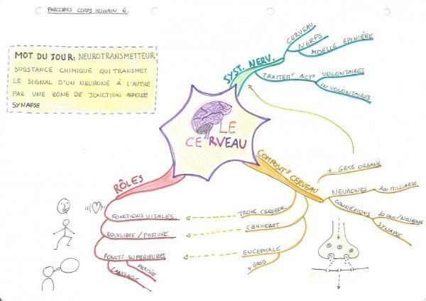 Mind map sur le cerveau.