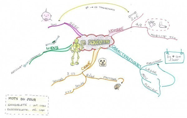 Mind map sur le squelette.