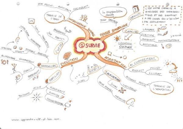 Mind map de la 1ère loi du cerveau.