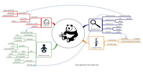 Exemple d'une carte sur le thème du grand panda