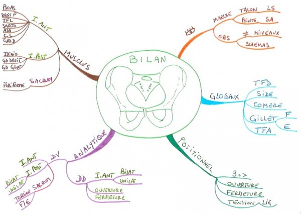 Bilan du bassin en ostéopathie.