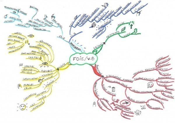 Le Miind Map de Katell Maitre, naturopathe, sur le foie et la vésicule bilaire en Médecine Traditionnelle Chinoise